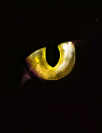 Eye in the dark icon, from Below
