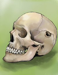 Skull from Below
