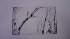 Trees, sugarlift etching