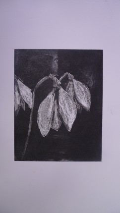Snowdrops, white ground etching
