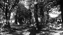 Penryn cemetery
